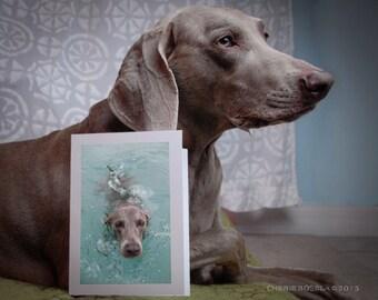 Weimaraner Swimming Greeting Card - Blank