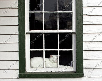 White Kitty Cat Waiting Patiently & Napping in the Window Fine Art Photography Photo Print