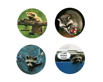 Raccoon  Magnets:  4 Sweet Raccoons for your home, your collection,  or to give as a unique gift