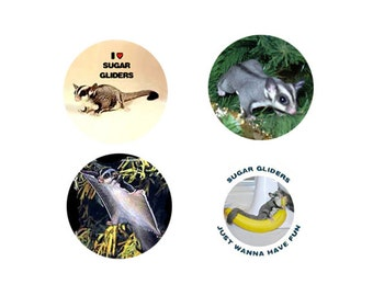 Sugar Glider Magnets:  4 Sweet Sugars for your home, your collection,  or to give as a unique gift