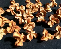 Dried carrot wood seed pods 100 per order