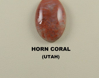 Fossilized Horn Coral Oval Designer Cabochon for Jewelry Artisans