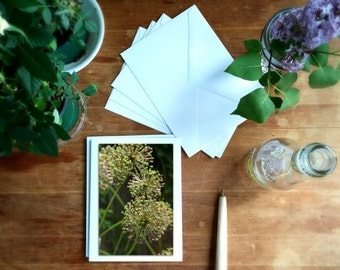 botanical photos, greeting card set, all occasions, hostess gift, flowers floral, blank notecards, frameable cards, green, Mother's Day gift