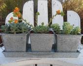 Centerpiece With 3 Succulents, Galvanized Tin, 4 Piece Container, Weddings, Barn, Succulent Garden
