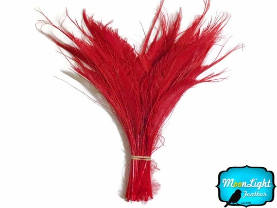 Peacock Feathers, 50 Pieces  Red Bleached Peacock Swords
