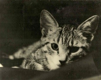 Squeaky for your fridge - magnet to make you smile Black & White Vintage Photography Cats Kittens Pictures