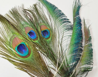 6pcs - Natural Peacock Feathers Eyes and Swords