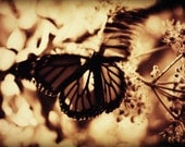 Monarch II Photograph - butterfly mariposa papillon nature insect black white brown sepia gift art print home decor photo photography