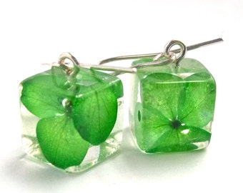 Green Botanical Resin Earrings.  Real Flower Resin Earrings. Pressed Flower Earrings.  Handmade Jewelry with Real Flowers - Green Hydrangea