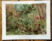 1894 flowering plants original antique botanical print - tropical