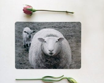 Post Card  of Ewe and Lamb