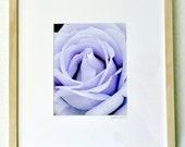 "Rose (mauve)--original 8""x10"" photograph framed in 16""x20"" white-washed wood frame"