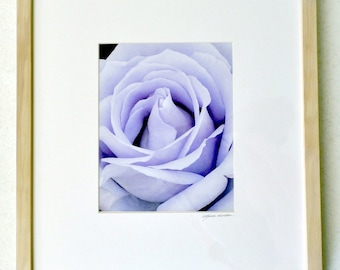 "Rose (mauve)--original 8""x10"" photograph framed in 16""x20"" white-washed wood frame"