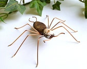 Handmade Large Brown Spider Jeffery Perfect Gift for Entomologists and Bug Lovers