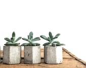 Set of 3 Concrete Hex Micro Planters, Geometric Planter, Succulent Planter, Wedding Favors, Hexagon, Modern, Honeycomb, frae and co