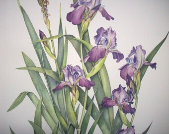 Art Print Botanical Floral / Spring Flowers Iris / Print from Original Watercolor Painting / Purple and Green