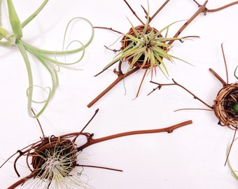 Air Plant Nest // Tillandsia Gift // Place setting