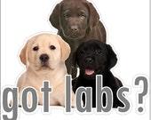 Got Labs? Lab Decal Labrador Retriever Sticker Dog Decal