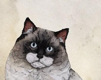 Mr. Ragdoll Cat // A5 print