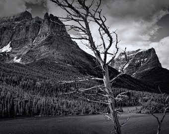 Lone Tree and Mountain Range by Lake Sherburne at Glacier National Park in Montana No.3040 A Black and White Fine Art Photograph