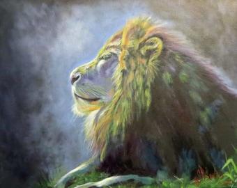 "Lion wildlife cat animal original art oil painting modern realism on 11"" x 14"" canvas by Sandra Cutrer Fine Art"
