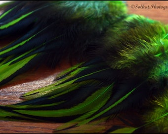 Green Laced Rooster Saddle Feather Crafting Supplies for Earrings Accessories Hair Clips, QTY12 4-7 inch
