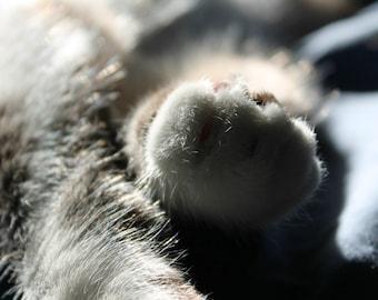 Furry Kitty Paws Fine Art Photo