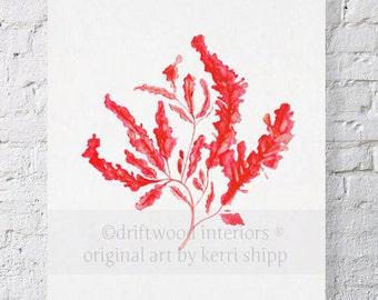 Seaweed in Ruby Print 11x14