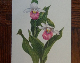 "Original 1968 Wildflower Gems, 4 1/2"" by 7 1/2"" Small Rectangular Art Print, Lady's Slipper ORCHID Versatile Size Lovely Matte Cream Paper"