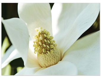 flower photography, magnolia, Dreamy White Magnolia Flower, Spring Flower Print, Flower Picture, cream, Pretty