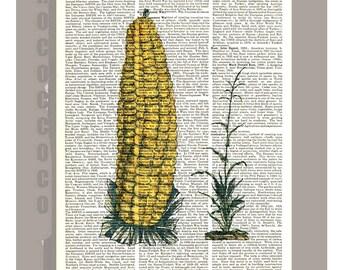 CORNCOB Maize Illustration Print on Vintage Dictionary Book page -  Kitchen decor, Botanical art, Artwork