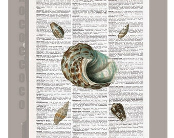 Sea SHELL2  -ARTWORK  printed on Repurposed Vintage Dictionary page 8 x 11 -Upcycled Book Print