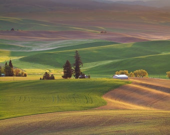 Kamiak Hills (Kamiak Butte, The Palouse, Washington)