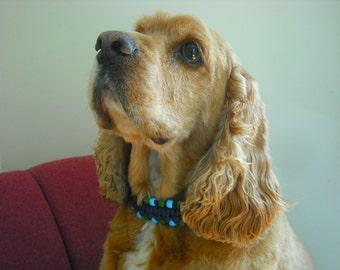 Funky Blue Dog Collar, large dog collar