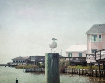 Beach Cottage Photograph Outer Banks Seagull Ocean Beach Scape Pale Pink Gray Aqua Wall Decor 8x12