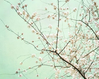 Cherry Blossom Tree Photograph Mint Green Pink Print Spring Flower Tree Pastel Mint and Pink Wall art 8x8