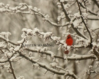 Birds, Cardinal, Bird Photo, Pictures of Birds, Nature, Photography