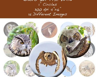 Owls In The WIld 1 Inch Circle Bottle Images INSTANT DOWNLOAD OWL001