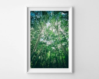 Aspen Tree Art - Green and Blue Wall Art, Nature Photography - Vertical Landscape Print, Tranquil Art - Oversized Art Prints Available