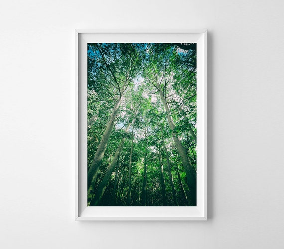Wall Art Trees Green : Aspen tree art green and blue wall nature photography
