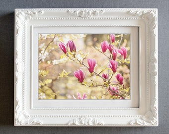 magnolia photograph flower photo fine art photography wall art nature golden light spring color summer warmth garden pink yellow