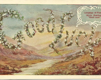 White Heather Flowers Good Luck Language of Flowers Vintage Postcard over 100 Years Old! 1909