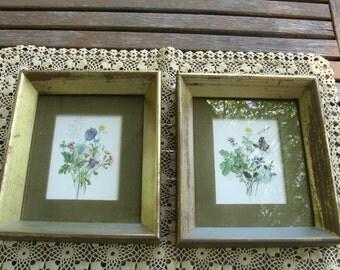 Framed  Floral Pictures
