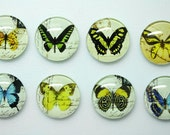 Glass Push Pins or Magnets - Butterflies