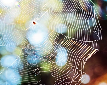 Spider web print, spider web photo, spider web canvas, nature photography