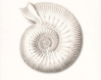 Coastal Decor Ernst Haeckel Nautilus Sea Shell Giclee Art Print