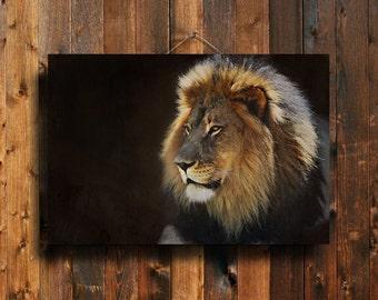 Lion - Lion photography - Lion canvas art - Lion art - Lion decor - Brown Lion decor - Lion canvas - Lion decoration