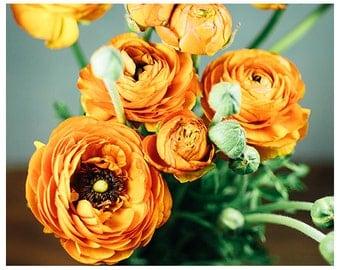 Orange ranunculus photograph - orange flower bouquet photograph - flower photography - nature photography - orange ranunculus wall art