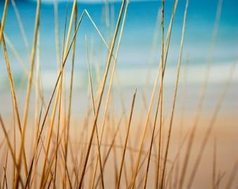 beach grasses photography beach nautical decor 8x10 8x12 fine art photography ocean abstract photography teal art print summer beach photo