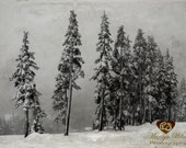 Winter photograph, Canadian winter scenery, evergreen trees photograph, winter forest photography, snow covered trees image
